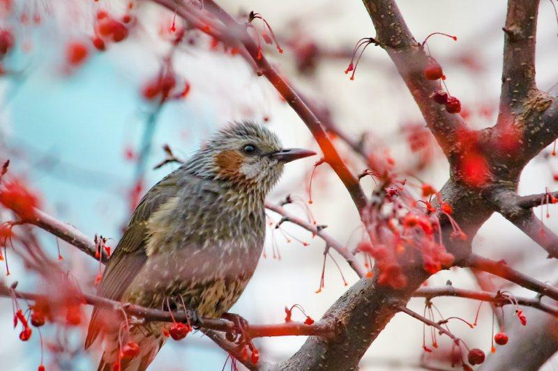 北京旅游攻略冬